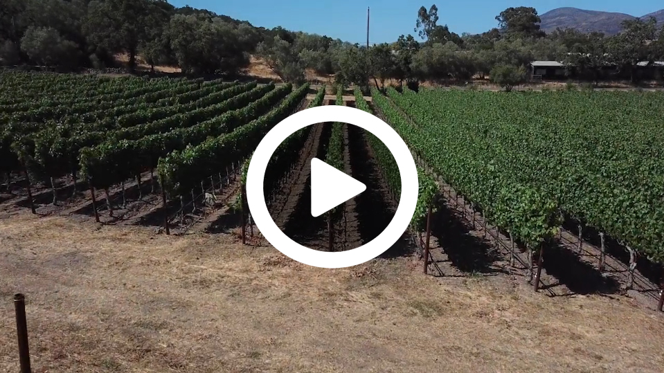 A video about the people and place that make Burly Wine special.